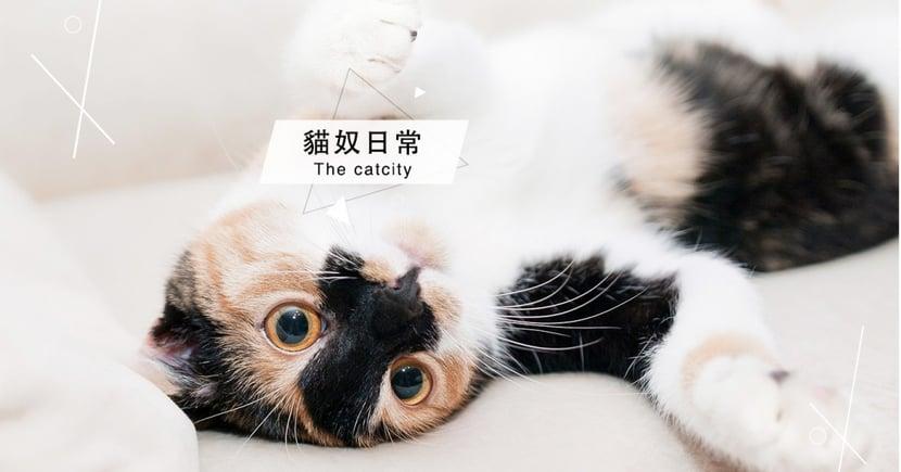 【貓咪踏踏】是想媽媽?還是撒嬌?貓喜歡幫人按摩的 4 種原因!