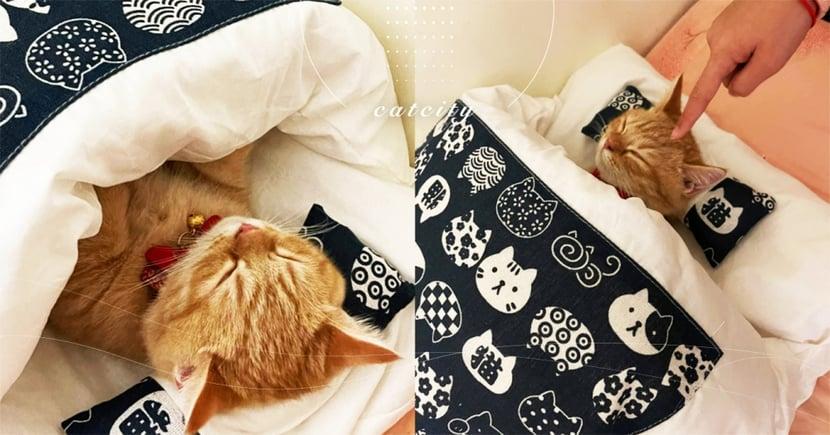 心臟爆擊!萌貓自己「蓋被睡覺」,超標準姿勢網笑翻:工讀生出來~