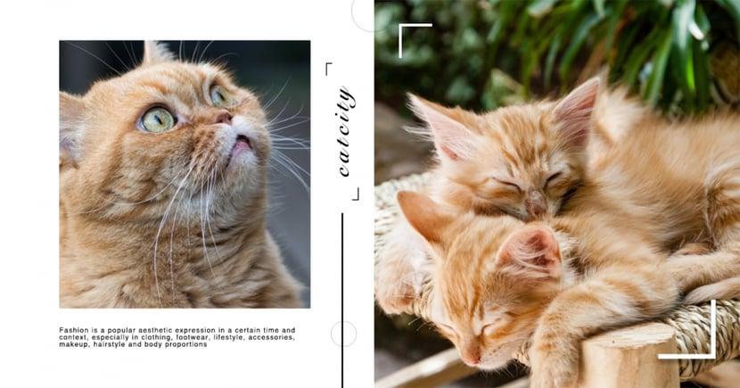 貓聞起來很香?是欲擒故縱高手?分析貓奴「愛貓成癮」的 5 個原因!