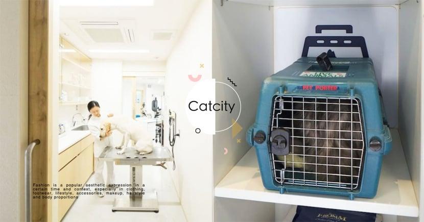 過年看診不撲空!2021年春節期間「全台24小時寵物醫院」清單統整
