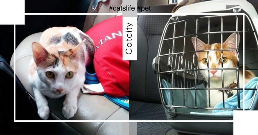 【寵物過年返鄉】貓搭車狂叫怎辦?出門這 5 件事要注意,避免貓緊張暈車!