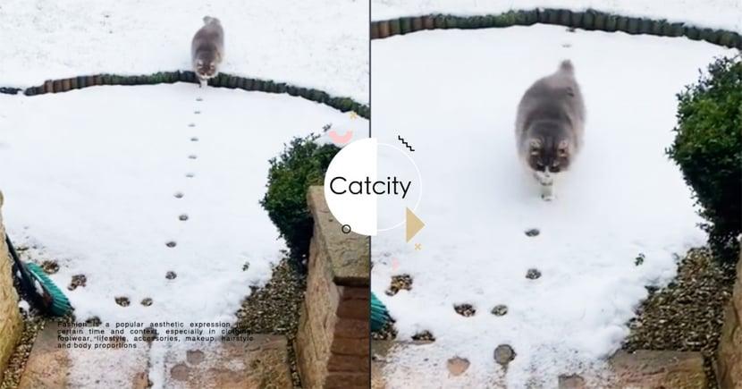 長毛貓精準踩中「雪中足跡」示範完美喵步,網笑翻:牠有強迫症