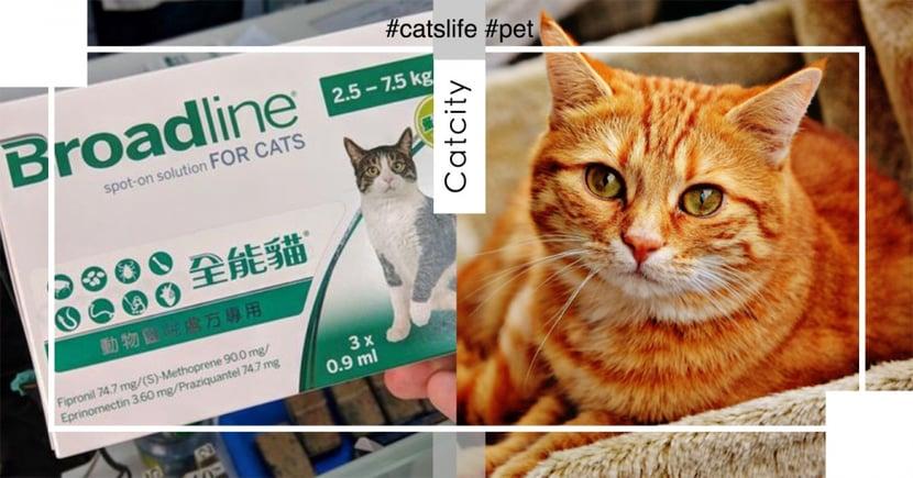【貓內外驅蟲藥】不出門也要定時驅蟲! 7 種常見貓咪驅蟲藥統整清單