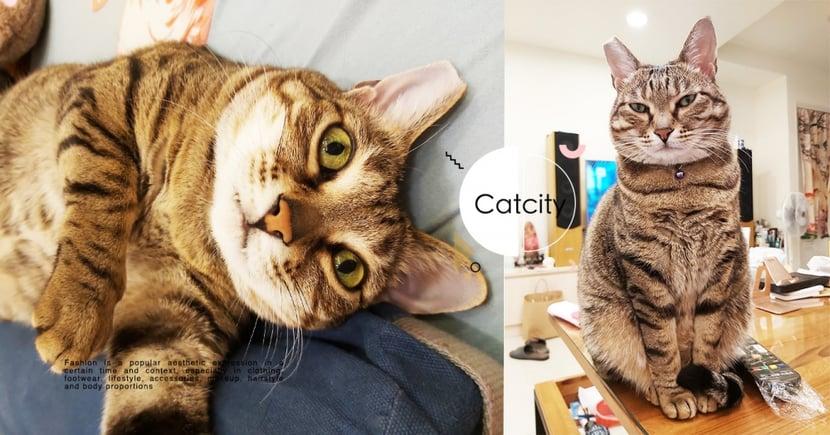 虎斑貓「一盯就是半小時」,超犀利眼神讓人背超毛 網笑:罐頭呢?
