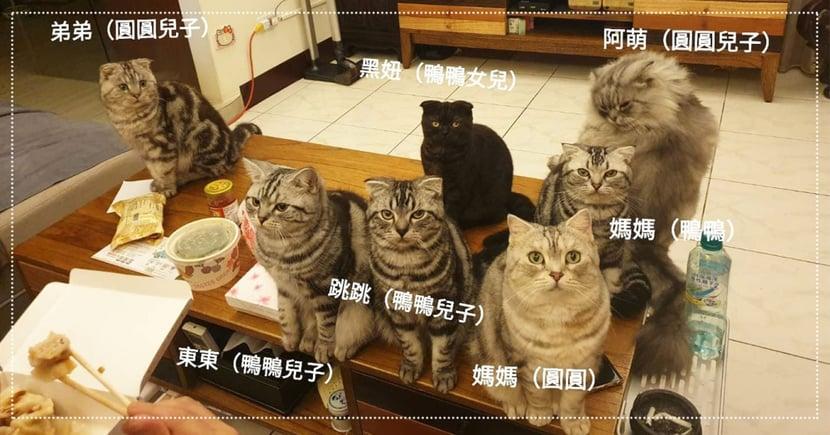 奴才吃飯被一家貓緊盯,「7隻坐定」眼神犀利 網笑翻:壓力山大