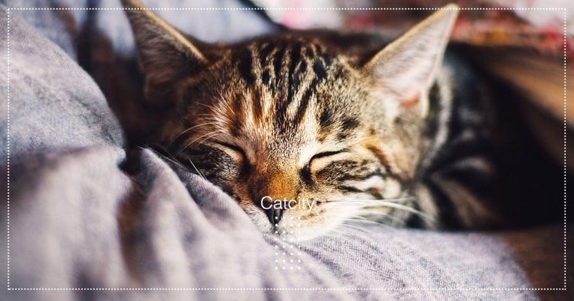 【貓咪打呼】貓咪打呼聲超大?伴隨「貓咪打鼾」相關的 8 種疾病!
