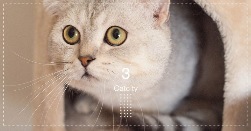 貓奴離不開貓!國外科學家分析 7 種原因,其中呼嚕聲竟利於身體健康?