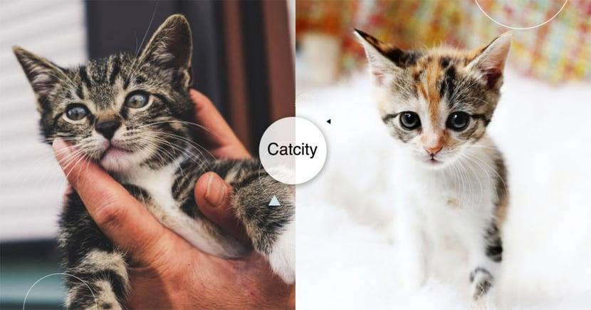 【貓咪認養新竹】養貓要去哪認養?新竹地區領養網站總整理!