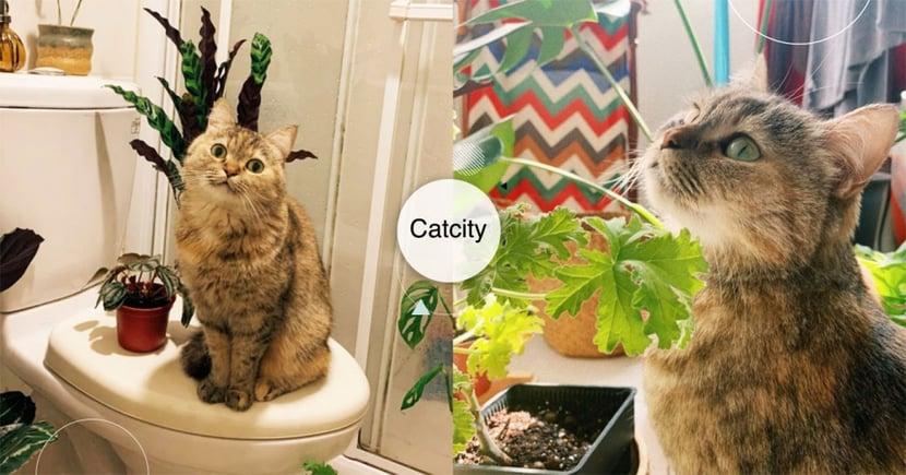 學植物曬光!萌貓「行光合作用」模樣超可愛,網笑翻:牠也想保暖