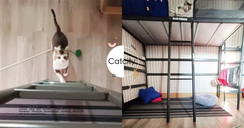 虎斑貓「早上六點」求陪玩,叼球爬床直逼恐怖片 奴:聽到鏗鏘聲就怕