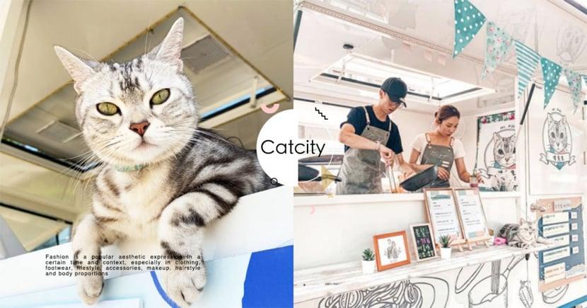 老闆是貓!超萌「貓貓餐車」環島出巡,網友推爆:啤老闆超可愛