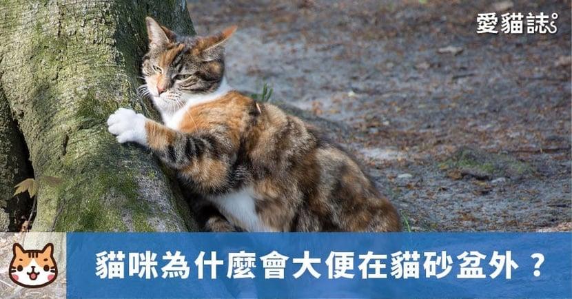 【貓咪亂大便】為什麼會大便在貓砂盆外?3 方法解決貓咪隨地排洩問題!