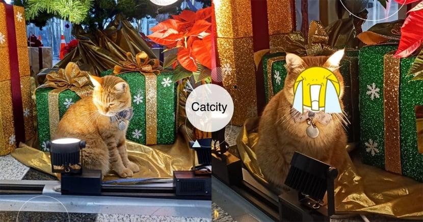 聖誕樹下橘貓「照燈取暖」,由下往上「自帶巨星光」 網:臉超好笑