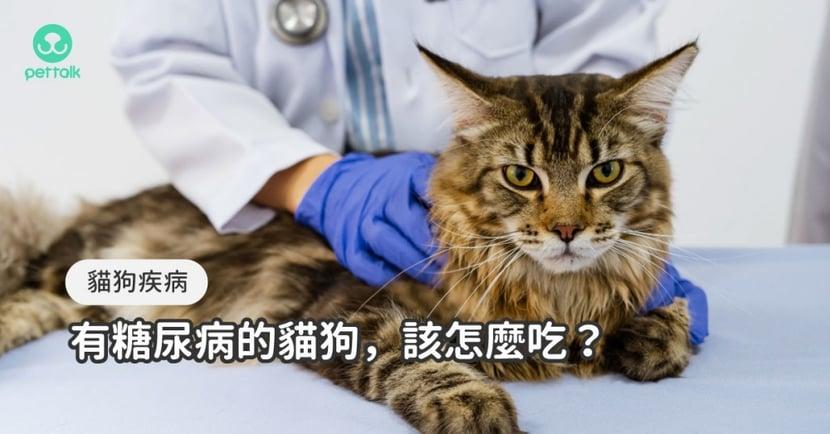 淺談貓狗糖尿病的臨床治療與飲食重點 專業獸醫—宋子揚