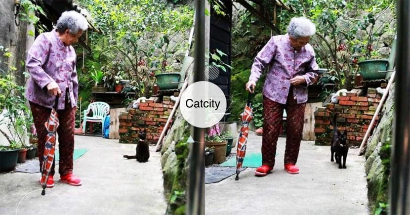 「黑皮!我們散步喔」聰明黑貓緊跟身後,守護92歲阿嬤 網:畫面好暖