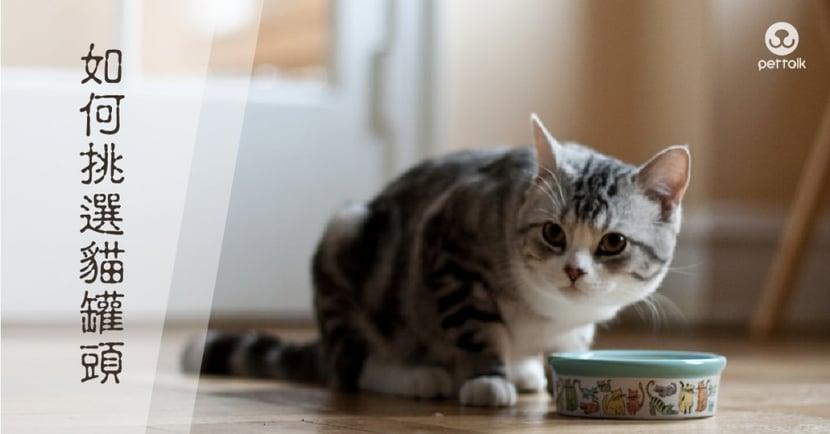 【該如何挑選貓罐頭】貓需要什麼營養?一文知曉挑選重點! PetTalk愛寵健康談