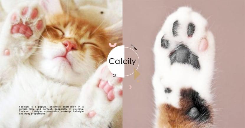 【肉球保養】龜裂、有傷口?如何保養貓咪肉球的 4 個方法