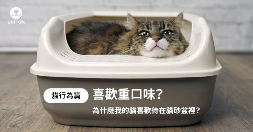 【貓行為】為什麼貓喜歡待貓砂盆?獸醫解析真正理由:和焦慮有關