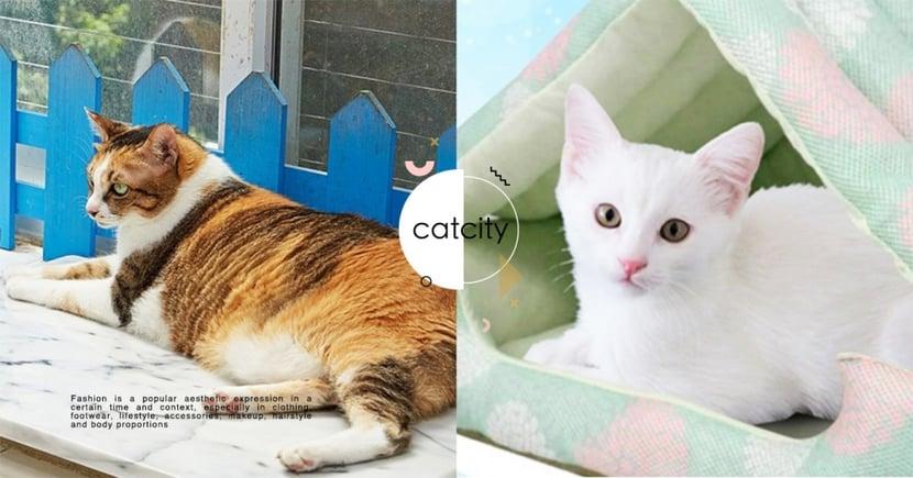 【貓咪消暑】超怕主子熱暈!飼主準備 4 種「消暑小物」,可預防貓咪中暑!