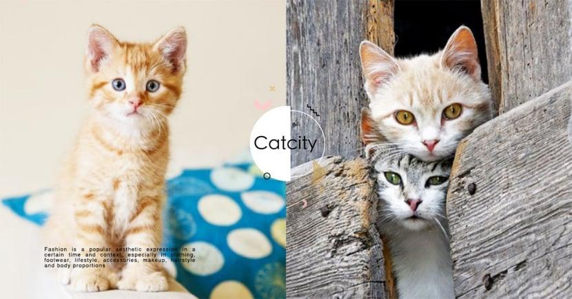 【貓咪花色】不同花色有不同性格?你家是屬於哪種米克斯貓咪呢!