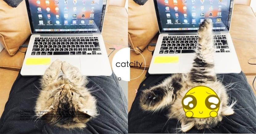 居家上班最大挑戰!日推主「抱貓辦公」萌臉干擾,貓奴笑:要怎麼專心!