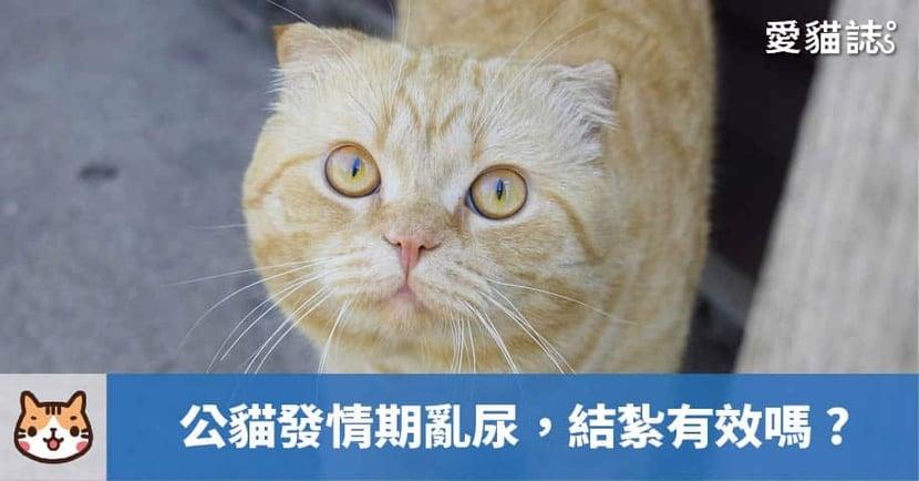 【公貓發情期亂尿】結紮有效嗎?關於公貓發情與結紮的小知識!