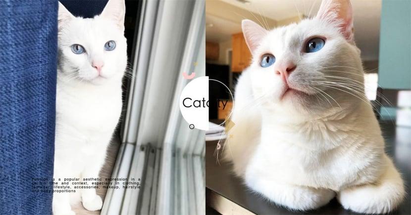 【米克斯】白貓 5 大個性分析!「優雅、聰明」兼具的精靈系萌貓