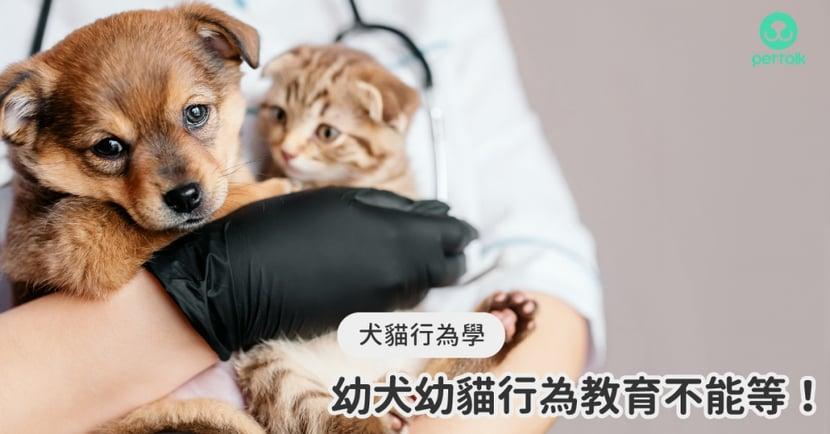 【小貓怎麼教】幼犬貓從小教!寵物社會化要學什麼? 專業獸醫—林瑋真