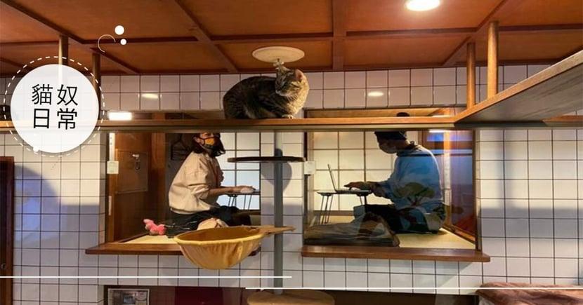 疫情衝擊!日本咖啡廳推出「不受打擾遠距辦公空間」,邊賞貓還能專心工作!