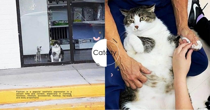 美國獸醫院店貓「賣萌騙吃喝」,路人以為懷孕狂給零食 醫生:牠公貓啦!