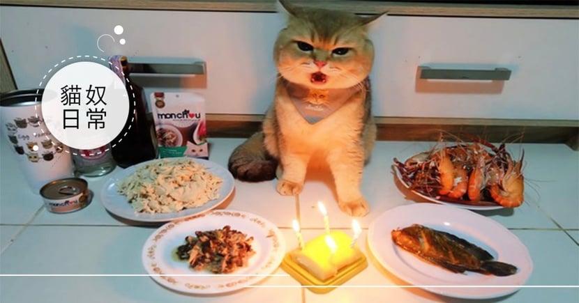 慶生大餐!泰國萌貓「美食當前擺臭臉」,網笑翻:當我地基主膩?!