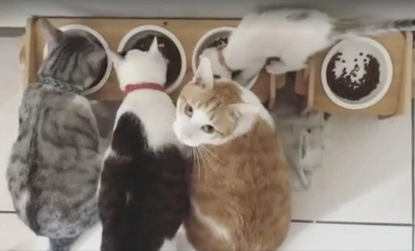 別人的比較好吃!小貓「暴風狂掃」飼料碗,橘貓求救眼神:「快處理一下啊」