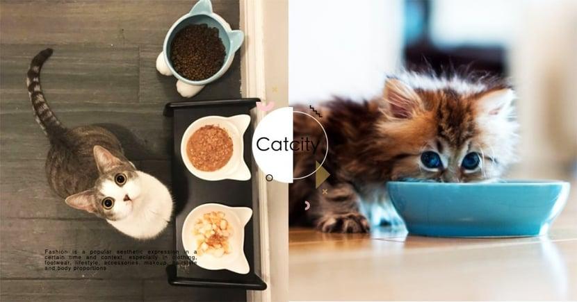 【貓咪飼料】主食罐、副食罐怎麼分配?專業獸醫分享「 2 大重點」要注意!
