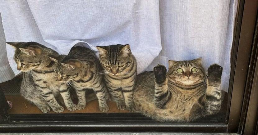 合照被陷害?日本虎斑貓「趴窗表情」超驚恐,網笑翻:「誰推的啦!」