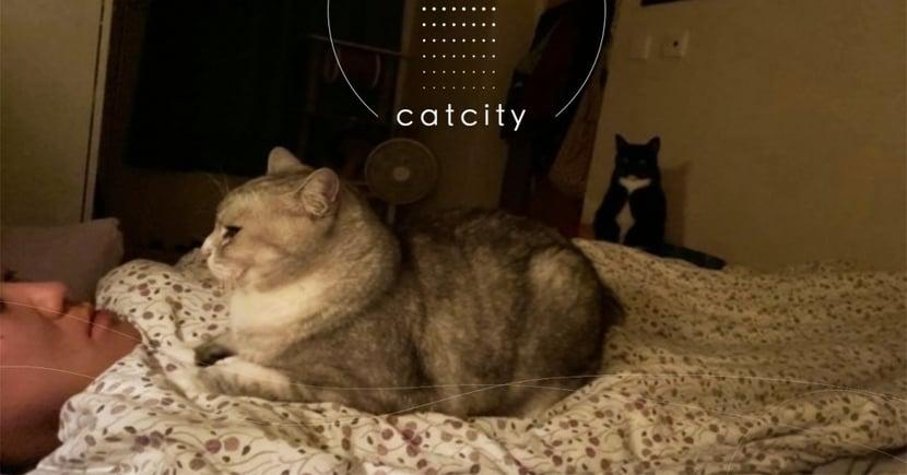 打疫苗不適!兩貓「呼巴掌+踩踩」徹夜守候,暖哭網友:牠們在守護你