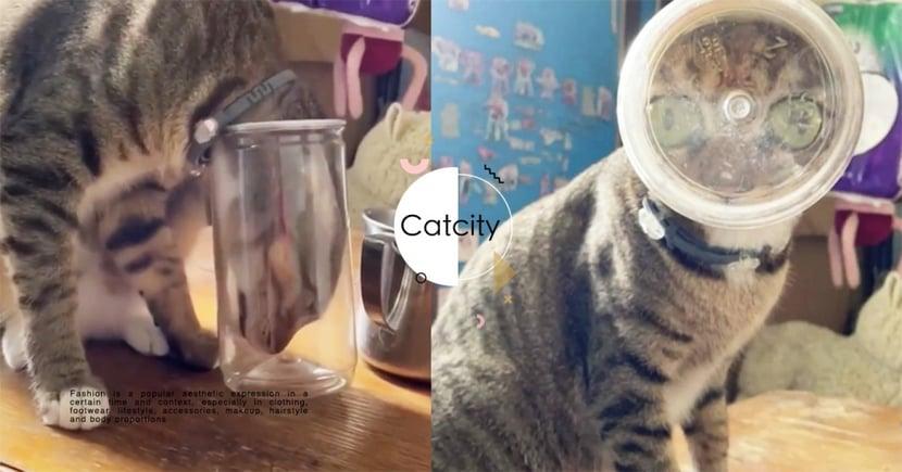 忙工作轉頭嚇壞!調皮虎斑貓「頭塞塑膠罐」,變身「外星巨眼貓」網驚呆