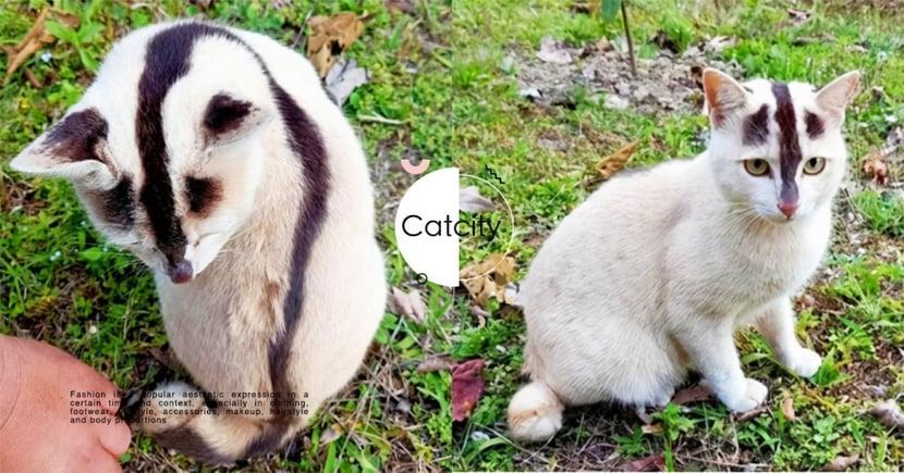 遇到保育動物?超奇特黑白貓「花紋神似臭鼬」,連警員都驚訝:真會認錯