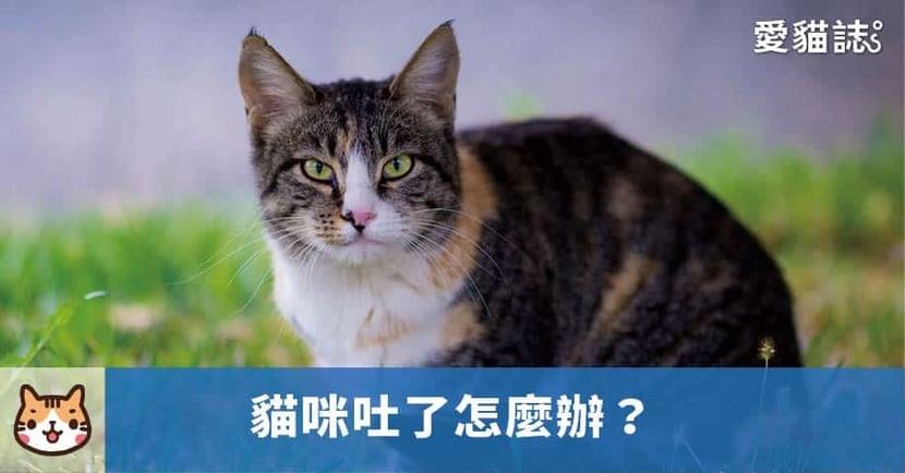 【貓咪吐了怎麼辦】貓為什麼會吐呢?分析貓咪嘔吐的 7 種常見原因!