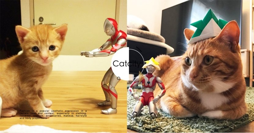 最強褓姆!飼主拿「鹹蛋超人」安慰小貓,長大後跟大橘依然感情超好