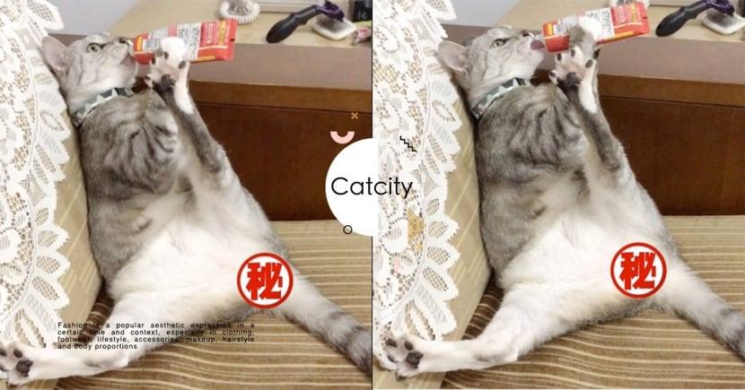 萌貓「手握肉泥」開腿大曝光,超難看吃相讓網笑翻:「根本沙發馬鈴薯」