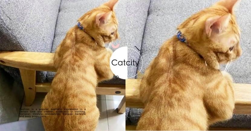 好壯啊!橘貓趴沙發「炫耀結實臂肌」,結果鏡頭一轉網笑翻:「是背影殺手啦」