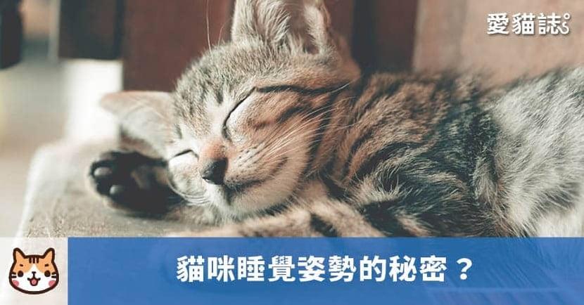 【貓咪睡姿】貓咪為什麼會道歉睡?揭曉 6 種貓咪睡姿 的秘密!