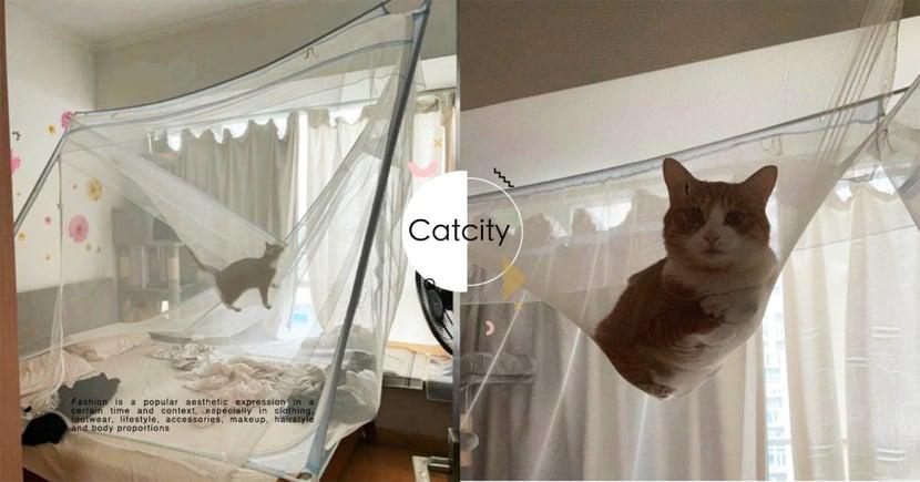 貓姑姑是你?奴才「裝蚊帳」變成遊樂場,每天被橘貓撲醒 網笑:要被壓壞了
