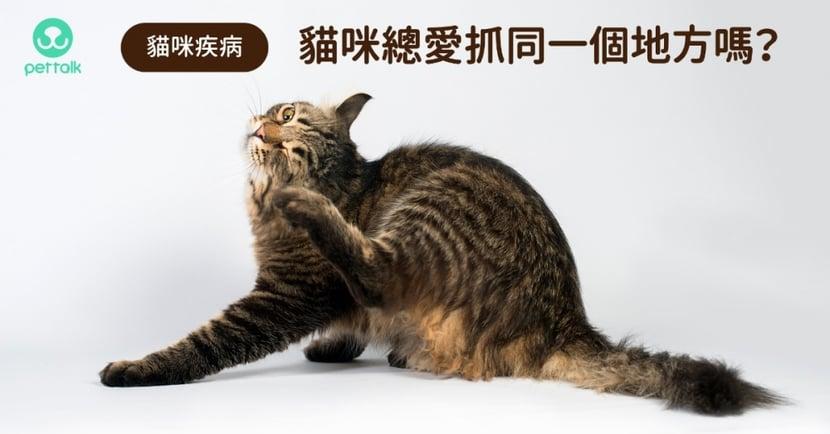 【貓咪抓癢】貓抓癢都同地方、頻率很高?小心是「食物過敏」或「異位性皮膚炎」找上門!