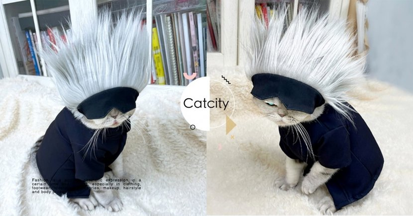 領域展開!貓咪cosplay咒術迴戰「低配版五條悟」,網友笑翻:真的炸毛了