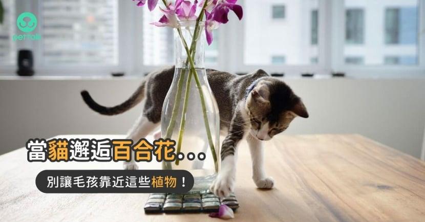 【對貓狗有害植物】百合花超毒?絕對不可以讓「貓狗誤食」的植物列表