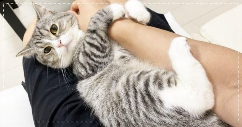 超級撒嬌!日本推主「出門一整天」,萌貓秒變「樹懶」黏住不放 網:好羨慕