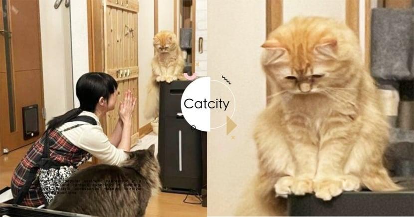 日本奴才不小心「把貓關廁所」狂道歉,貓咪「眉頭深鎖」超哀怨 網笑:要罐罐賠罪啦