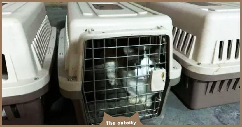 【狂犬病】貓也會染狂犬病?關於狂犬病「症狀、預防、傳染途徑」一文介紹!