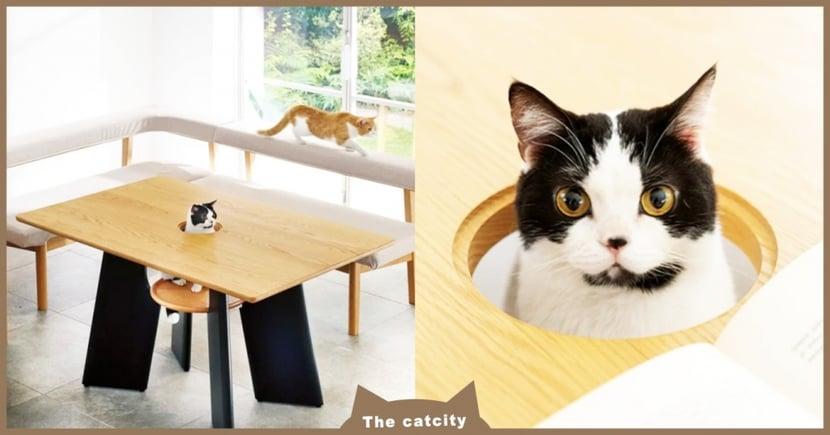 超像打地鼠!日本商家推出「人貓共桌」主打放鬆,貓奴笑翻:根本不得安寧